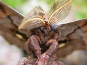 mothface